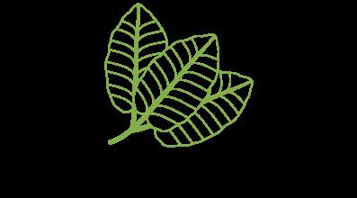 logo-kratomwinkel.nl